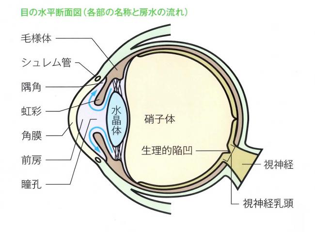 目の各部の名称