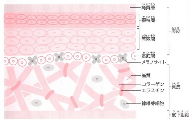 足の組織図